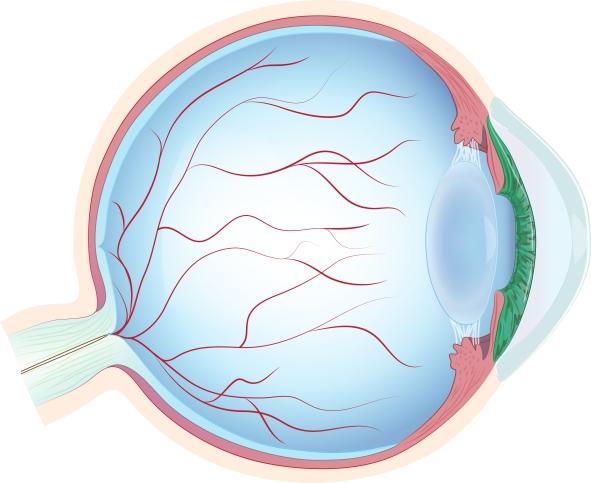 eyeball_cx